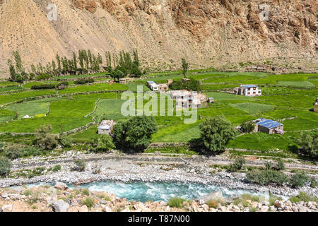 Green summer view of the Indus valley in Himalaya mountains in Ladakh - Stock Photo
