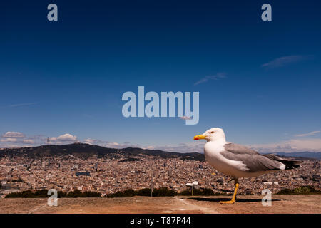 Seagull perching on wall against cityscape. A view of Barcelona from Montjuïc castle, blue sky,  horizontal composition, copy space. - Stock Photo