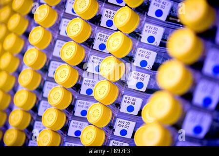 Brunswick, Germany. 30th Apr, 2019. Bottles filled with cyanobacteria are stored in a cool storage room of the Deutsche Sammlung von Mikroorganismen und Zellkulturen (DSMZ). Credit: Hauke-Christian Dittrich/dpa/Alamy Live News - Stock Photo