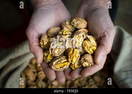 France, Haute Savoie, Seyssel, Berger oil mill, Jacky inspects the quality of its production - Stock Photo