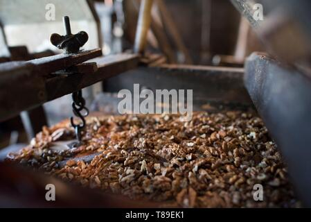 France, Haute Savoie, Seyssel, Berger oil mill, the kernels advance by vibration towards the grinding rollers - Stock Photo
