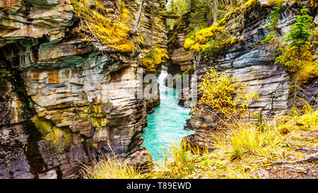 The turquoise waters of the Athabasca River flows through a canyon right after the Athabasca Falls in Jasper National Park in Alberta, Western Canada - Stock Photo
