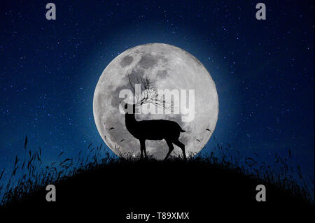 The deer stands on the mountain a large moon background in the night that the stars are full of sky - Stock Photo