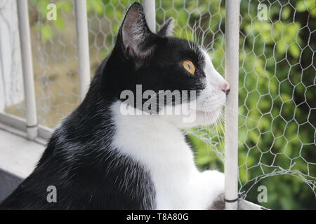 Black and white Cat at window - Stock Photo