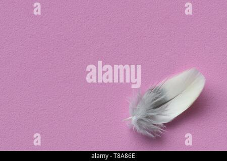 A single small delicate bird feather in the lower right corner on a solid pink background with room for text. - Stock Photo