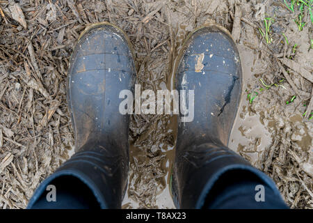 Looking down at black rubber boots on a muddy farm pathway, with mulch and grass and brown puddle waters. Farming boots are dirty and mucky. - Stock Photo