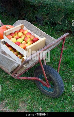 France, Seine-Maritime, Pays de Caux, Norman Seine River Meanders Regional Nature Park, Jumieges, sale of apples on the Fruit Route in the orchards along the Seine river - Stock Photo