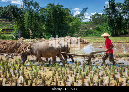 Indonesian rice farmer, portrait, Central Java, Indonesia - Stock Photo