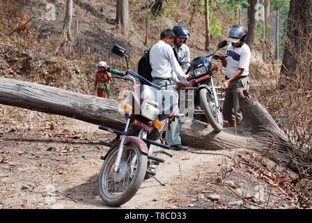 Group of motorcyclists in forest, road blocked by falling trees. Problems because bad weather - weather damages - Stock Photo