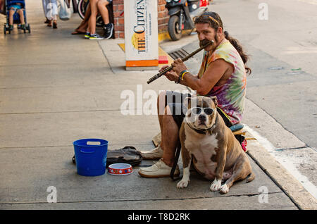 Key West, USA-december 26. 2015 : Street musian or man playing flute with dog in Key West, USA. Busker performing music in public place for tips in blue bucket. Busking and earning concept - Stock Photo