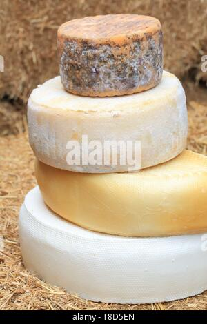Spain, Canary Islands, Tenerife, province of Santa Cruz de Tenerife, Adeje, Montesdeoca cheese dairy founded in 1984, various goat cheeses - Stock Photo
