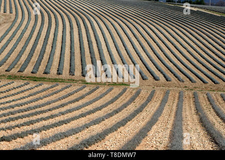 Abstract Field Patterns of Lavender Fields in Winter near Moustiers-Sainte-Marie Provence France