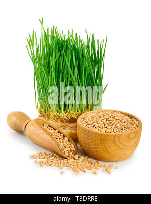 Wheat green sprouts, wheat seeds in the wooden bowl isolated on white background - Stock Photo