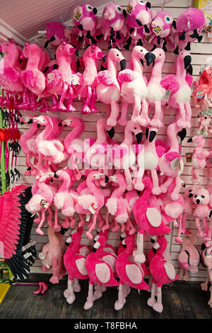 Key West, USA-december 26. 2015 : Toy flamingos on shop display in Key West, USA. shopping. Stuffed pink birds on white wall background. Having fun and playing concept - Stock Photo