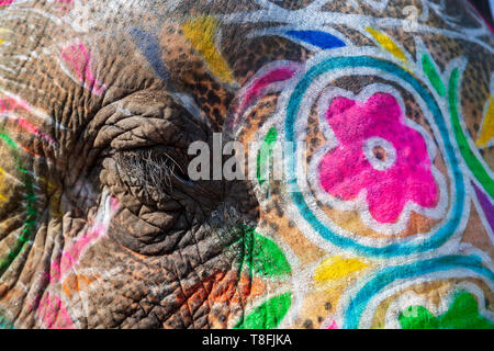 Close-up of the eye and skin of a painted Indian Elephant, Rajasthan, India - Stock Photo