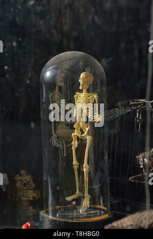 Human skeleton model on display in a secondhand shop, Hastings, East Sussex, England, UK - Stock Photo