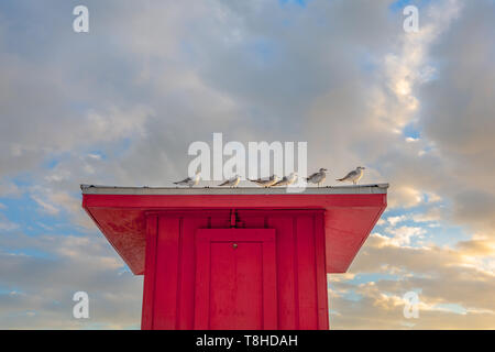 Birds perched on the roof of a red lifeguard hut.  Ample copy space in sky if needed. - Stock Photo