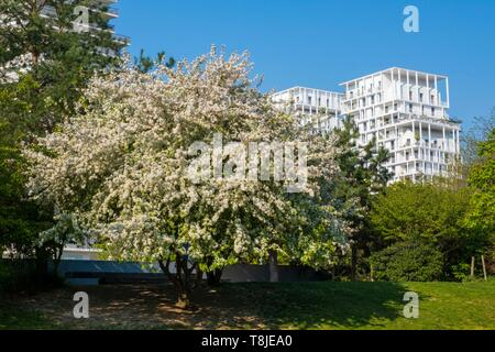 France, Paris, Batignolles district, Clichy Batignolles Martin Luther King garden, cherry blossom - Stock Photo
