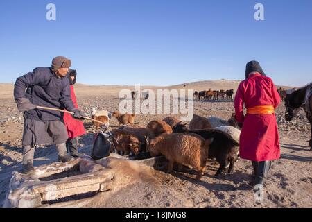 Mongolia, East Mongolia, Steppe area, Mongolian shepherds in traditional clothes come out of the well water in the middle of winter to give the horses a drink - Stock Photo