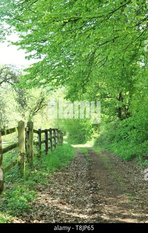 Walking path in the woods of Germany on a warm, spring day. - Stock Photo