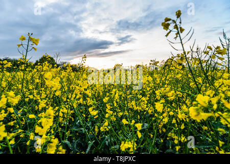 Sunset over a field - UK - Stock Photo