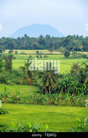 Sri Lanka, North Central Province, Polonnaruwa, rice fields - Stock Photo
