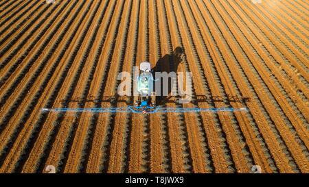 France, Alpes de Haute Provence, Verdon Regional Nature Park, Plateau de Valensole, Puimoisson, lavender field (aerial view) - Stock Photo