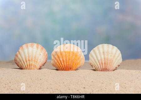 Horizontal shot of three seashells upright on the sand of a beach.  Blue sky like background.  Copy space. - Stock Photo