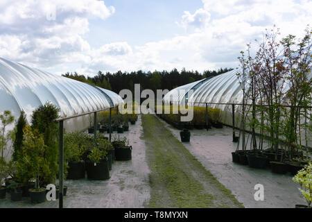 Rows of coniferous trees in tree plants garden nursery - Stock Photo