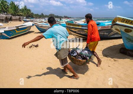 Sri Lanka, Eastern province, Pottuvil, Arugam bay, back from fishing on Pottuvil beach - Stock Photo