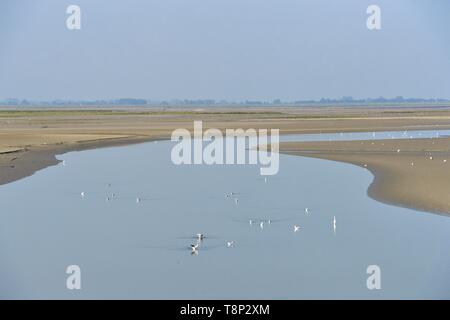 France, Somme, Baie de Somme, Saint Valery sur Somme, mouth of the Somme Bay - Stock Photo