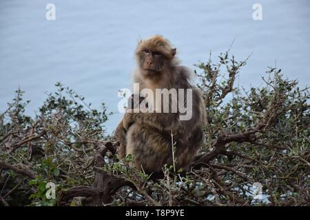 The viewpoint Cap Carbon with monkeys on 02.04.2019 near the port of Bejaia - Algeria. | usage worldwide - Stock Photo