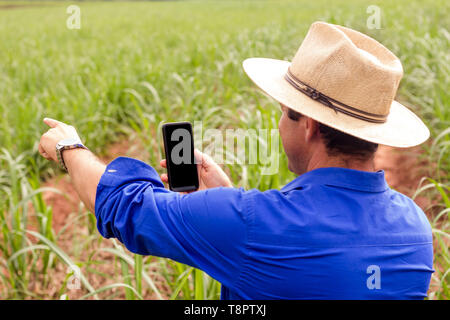 May 12, 2019 - GlóRia De Dourados, Mato Grosso do Sul, Brazil - A farmer seen in a field of sugar cane with his smartphone.Brazil became a model of diversification of the use of sugar cane as a raw material, manufacturing varied products from the plant.Agriculture in Brazil is one of the main bases of the country's economy. Agriculture is an activity that is part of the primary sector where the land is cultivated and harvested for subsistence, export or trade. Credit: Rafael Henrique/SOPA Images/ZUMA Wire/Alamy Live News - Stock Photo