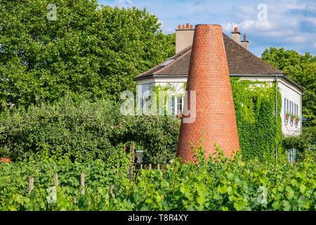 France, Paris, the park of Bercy, the vineyards - Stock Photo