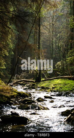Fairy forest in the mountains of Germany - Stock Photo