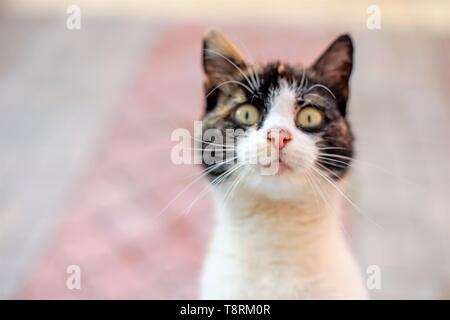 Funny portrait of a cat, looking in the window. Face close-up with wide open surprised eyes. Soft selective focus on the nose. - Stock Photo