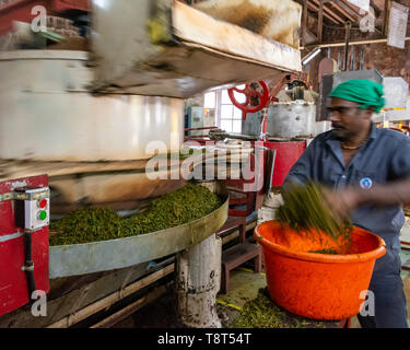 Horizontal view of a worker at a tea factory in Munnar, India. - Stock Photo