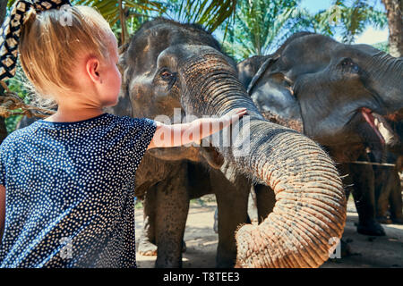 Cute little girl stroking the trunk of an Asian elephant at an animal sanctuary in Thailand - Stock Photo