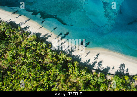 Top down view of tropical landscape with palm trees silhouettes
