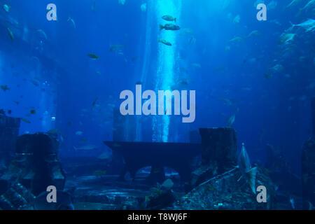 A lot of fish in a large decorative aquarium. - Stock Photo