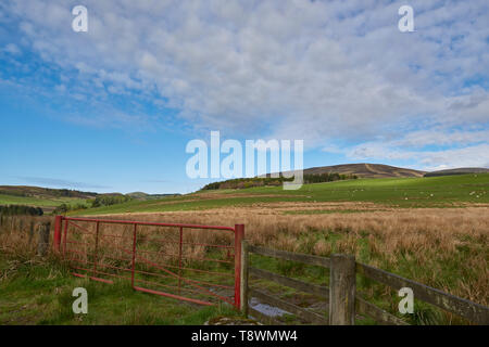 A red painted Metal 7 bar gate at the entrance to a Field in the Hills of the Angus Glens on one early May Morning. Glen Prosen, Scotland. - Stock Photo