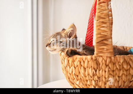 Cute little kitten sleeping in wicker basket near window - Stock Photo