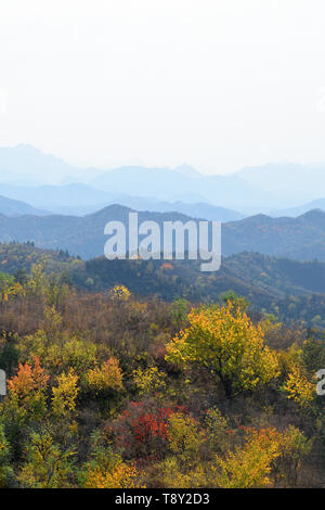 Autumn forest in the mountains of northern China. Autumn Trees turning gold in the mountains of Beijing Province, northern China, taken from the Great - Stock Photo