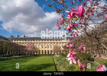 Magnolien im  Park Jardin du Palais Royal,  Paris, Frankreich     Magnolia at  Jardin du Palais Royal, Paris, France - Stock Photo