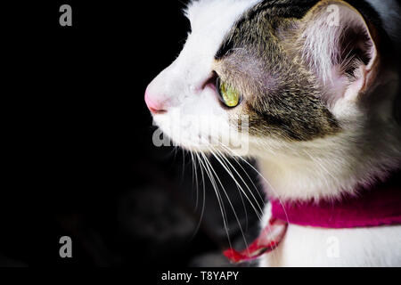 Close up  side view of black white cute kitten. Pets and lifestyle concept. Lovely fluffy cat on dark background - Stock Photo