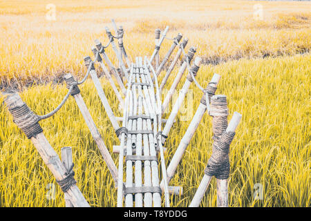 Bamboo bridge is vernacular structure Use the rope in construction filed into the green rice  field. - Stock Photo
