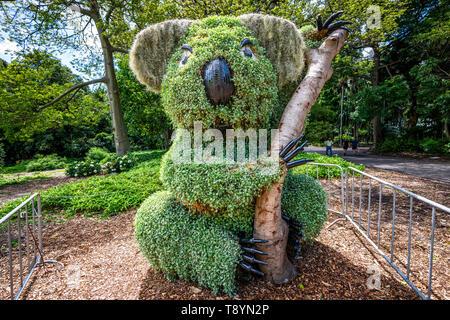 Koala shaped bush in Royal botanic garden in Sydney NSW Australia - Stock Photo