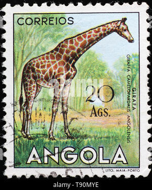 Giraffe on vintage postage stamp of Angola - Stock Photo