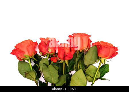 Five red roses on a white background. Bright fresh flowers with green leaves. Flower composition. Big rosebuds. View from above. Copy space. - Stock Photo
