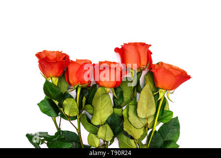 Floral background with a bouquet of red roses. Colorful bouquet of roses on a white background. Flowers lie in a row, top view. Close-up. Copy space - Stock Photo
